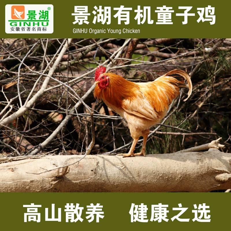 安徽有机童子鸡 新鲜冷冻鸡肉 高山散养土鸡 农家散养公鸡 1只