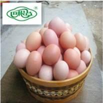 巴根草牌   林间散养   无公害   生态土鸡蛋   30枚  泡沫盒包装