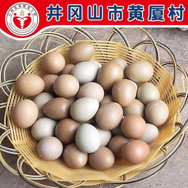电商公益扶贫  井冈山 黄厦村  野山鸡蛋30枚包邮