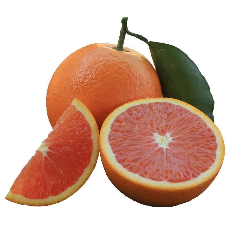 珍瑶 橙中贵族 红肉脐橙子血橙5斤装