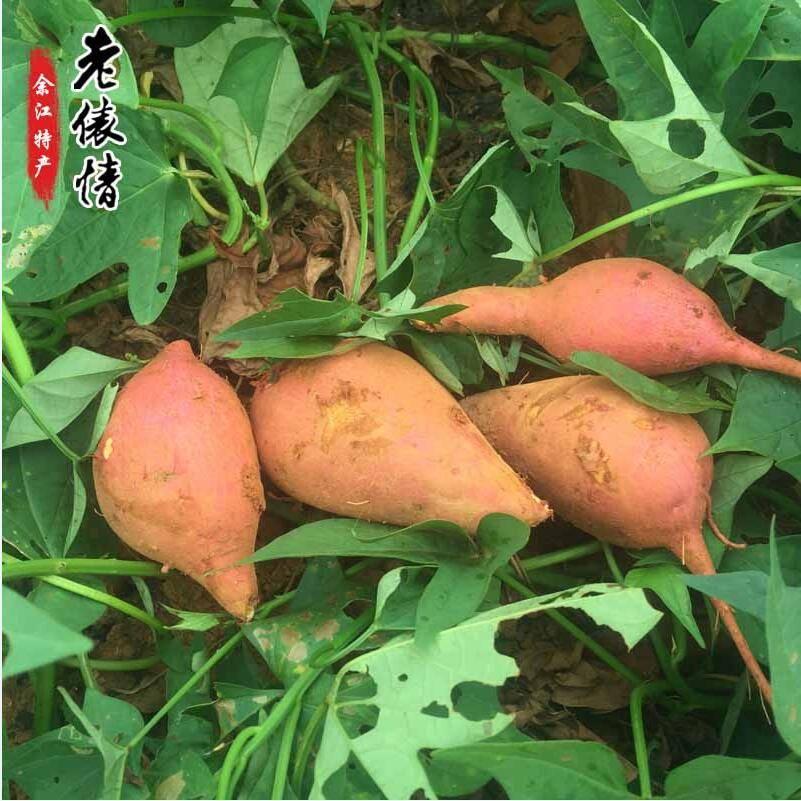 老俵情 中国科学院红壤生态实验站-农家自产新鲜红薯(3斤体验装)